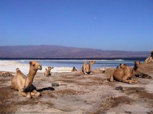 Resultado de imagen de lago assal yibuti